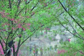 蝶恋花·春到桃源人不到
