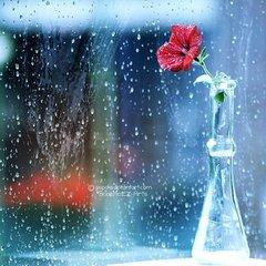 崇义里滞雨