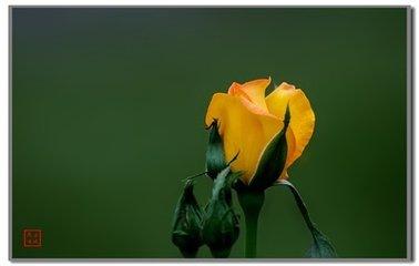 种花用前韵