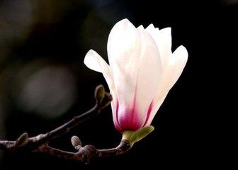 减字木兰花(春)