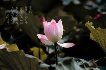 水仙子·咏江南